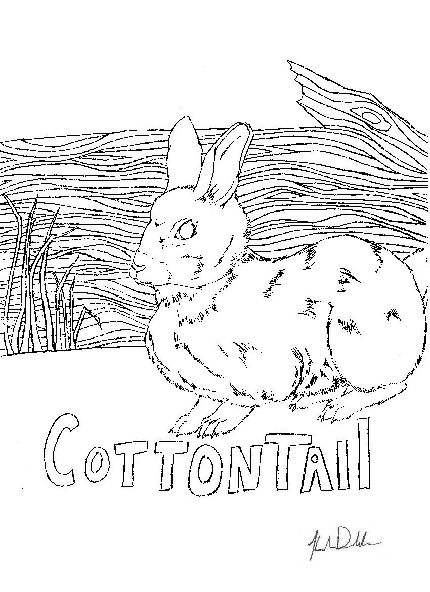 wildlifedepartment coloring pages - photo#49