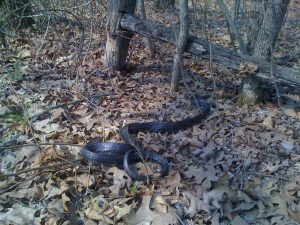 Snakes in the Woodpile, Snakes in the Leaves