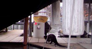 Otter on dock
