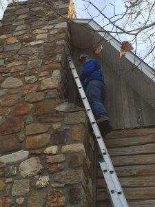 Adair's Wildlife Removal