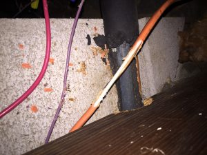 Squirrel chewed electrical wires in attic