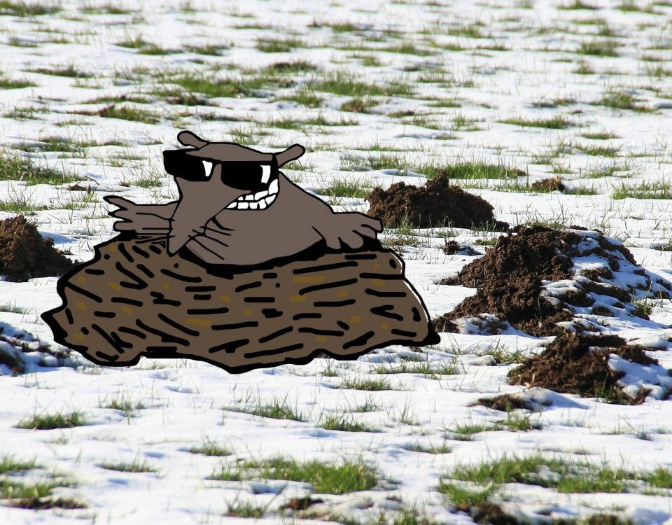 Moles in Your Yard - Do Moles Hibernate in Winter?